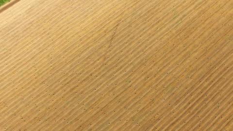 vídeos y material grabado en eventos de stock de antena: campos de trigo después de la cosecha en día soleado - campo arado