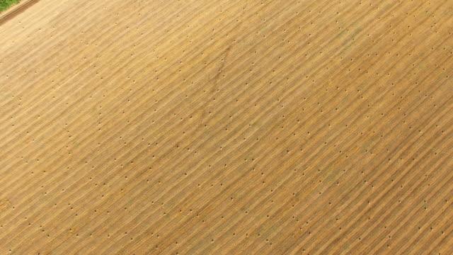 晴れた日に収穫後空中: 小麦畑 - 梱包機点の映像素材/bロール