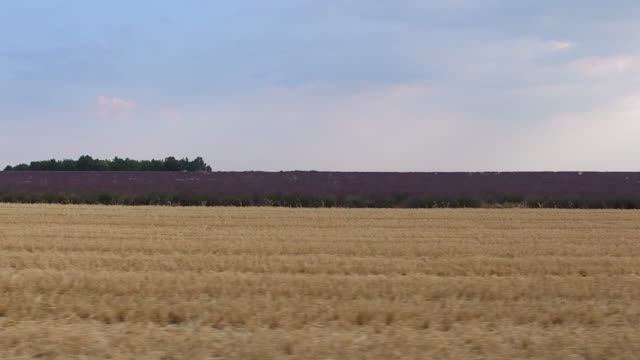 vidéos et rushes de wheat fields after the harvest and lavender fields in summer, provence, france - plan en travelling