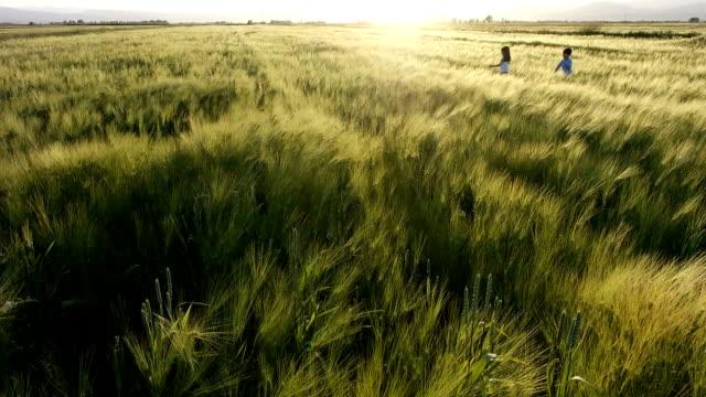 Champs de blé et de jeux
