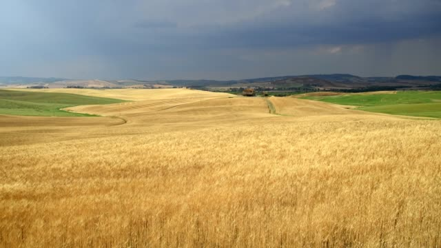 wheat fields in landscape with a rising thunderstorm, val d'orcia, siena province, tuscany, italy - lockdown viewpoint stock videos & royalty-free footage