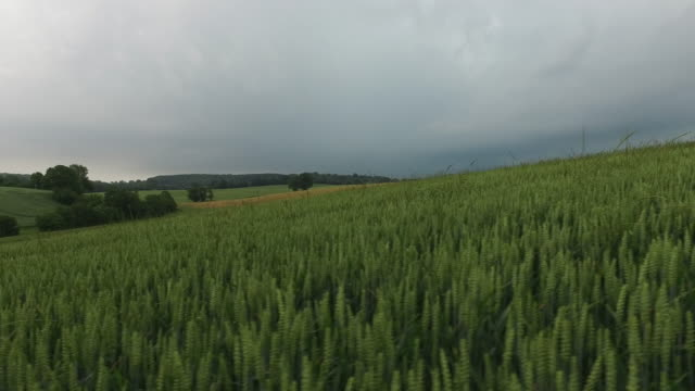 wheat fields in spring, cloudy sky, tracking - overcast stock videos & royalty-free footage