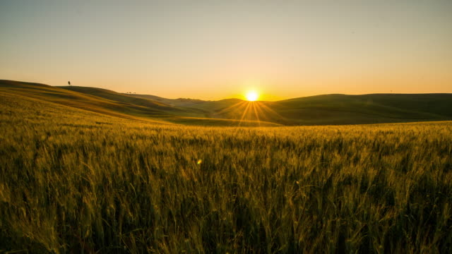 t/l 8k wheat fields in the tuscany region - tuscany stock videos & royalty-free footage