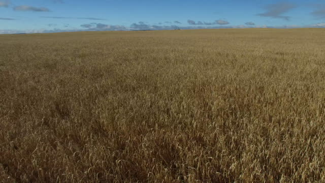 wheat fields - hay field stock videos & royalty-free footage