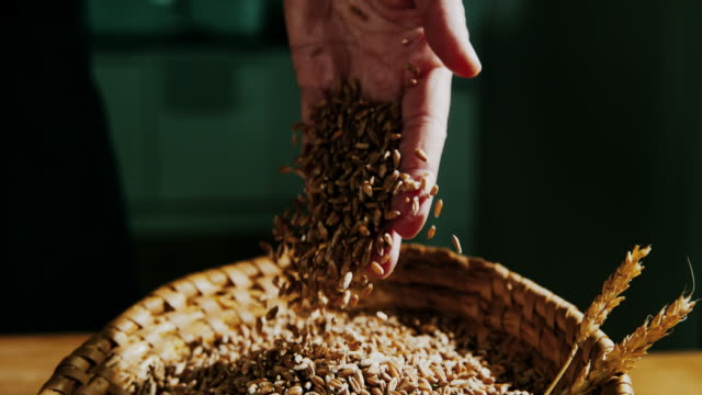 slo mo wheat grains falling from a hand - seed video stock e b–roll