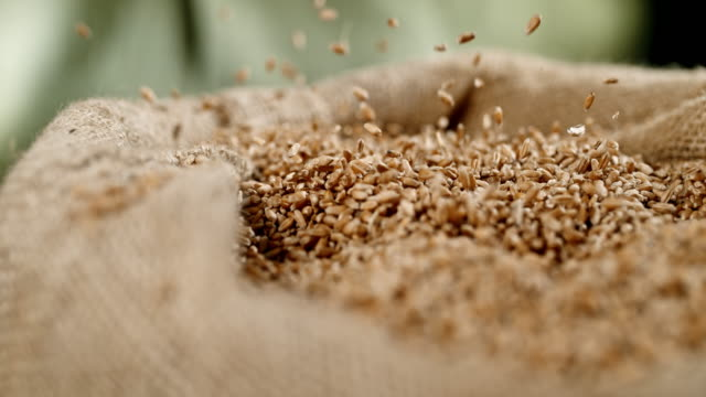slo mo wheat grains falling into a sack - sack stock videos & royalty-free footage