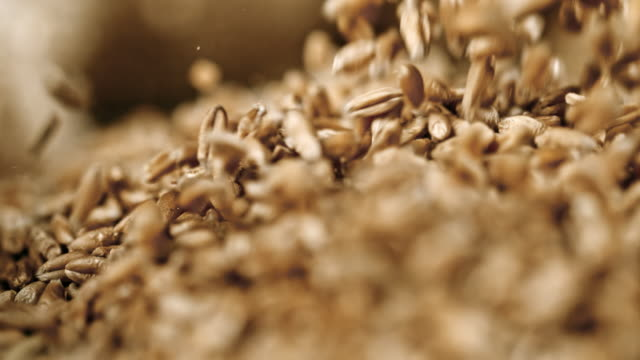 slo mo wheat grains falling on a heap - wheat stock videos & royalty-free footage