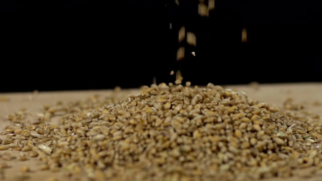 HD SUPER SLOW-MO: Wheat Grains