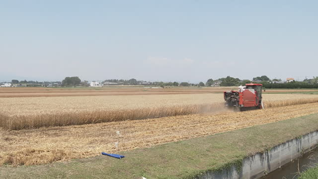 wheat harvest, gunma, japan - 六月点の映像素材/bロール