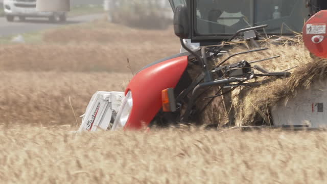 cu, wheat harvest, gunma, japan - 六月点の映像素材/bロール