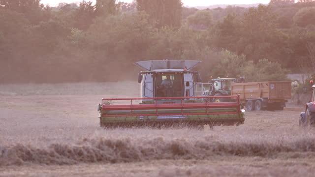 wheat harvest in fields, in benfleet, essex, england, u.k., on tuesday, august 24, 2021. - dust stock videos & royalty-free footage
