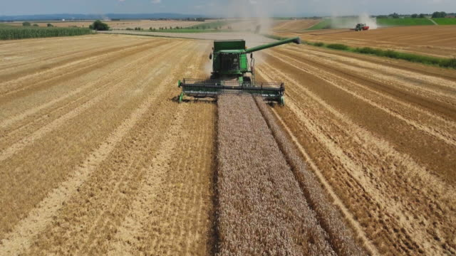 Wheat Harvest In Gäuboden (Gaeuboden) Area In Lower Bavaria