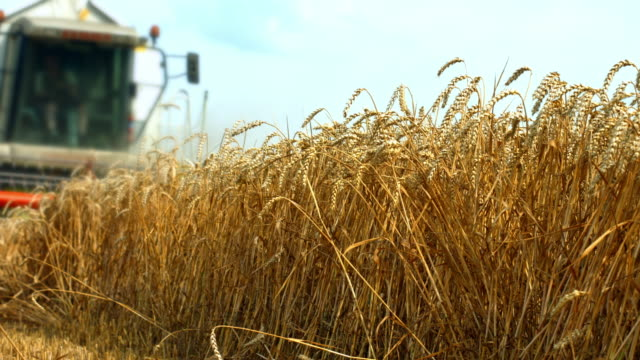 wheat harvest in late summer - combine harvester stock videos & royalty-free footage