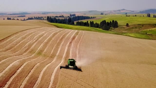 wheat harvest in north central idaho - combine harvester stock videos & royalty-free footage