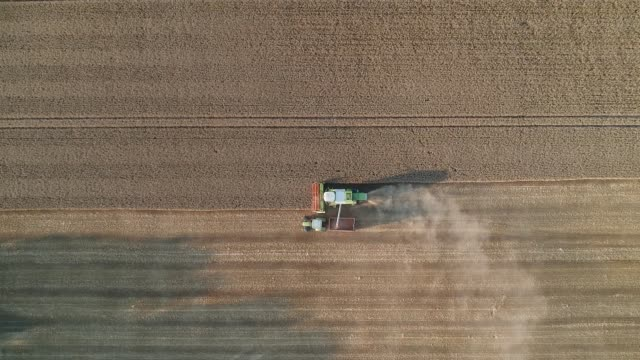 wheat harvesting at sunset, vertical, normandy - 農林水産関係の職業点の映像素材/bロール