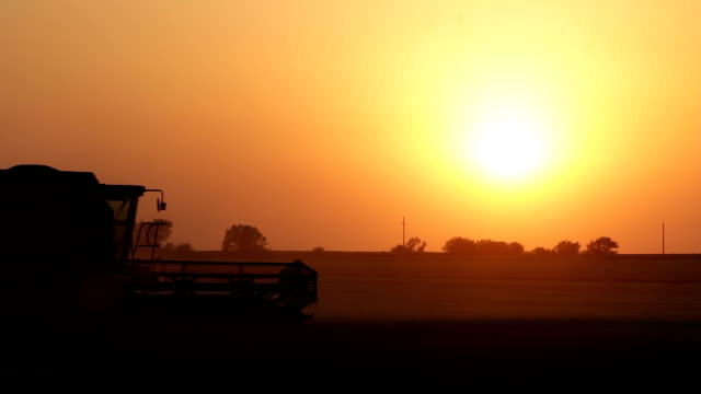 wheat harvesting at sunset - great plains stock videos & royalty-free footage