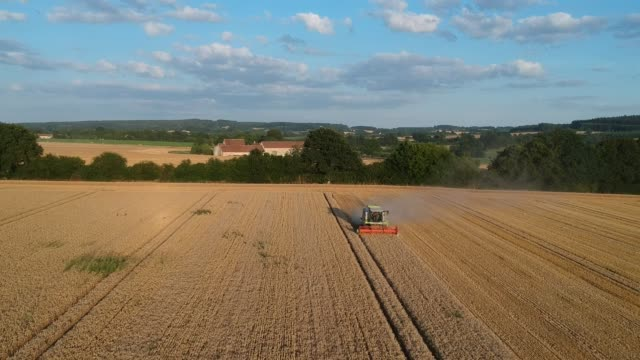 Wheat Harvesting in a Rural Landscape, Normandy