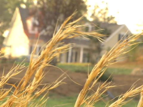 Wheat in front of Real Estate