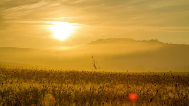 T/L Wheat in the morning mist