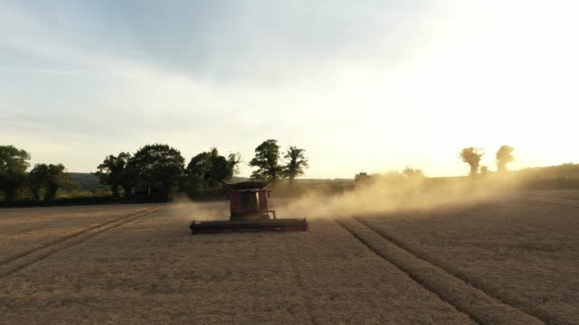 GBR: UK Wheat Growers See Smaller Yields After Wet Winter And Dry Spring