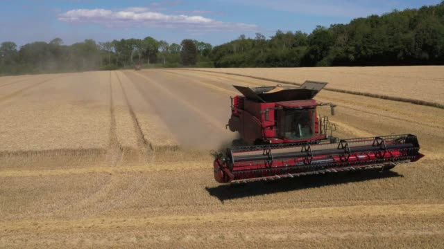 wheat is harvested in fields for street end farms on july 29 2020 in canterbury england british wheat growers were expecting to cut the smallest... - winter点の映像素材/bロール
