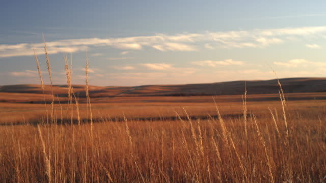 wheat on great plains sunset - prärie stock-videos und b-roll-filmmaterial