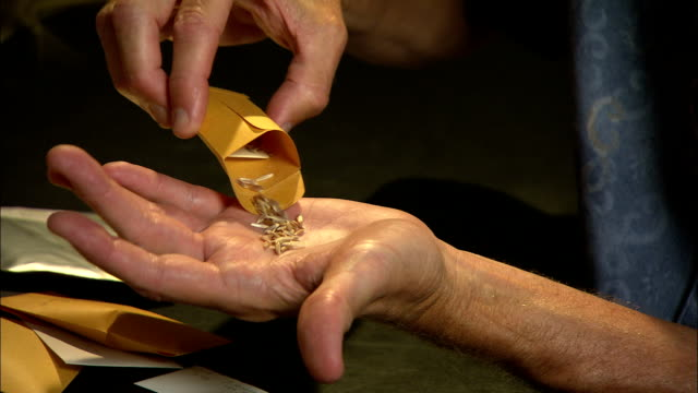 a wheat sample falls from an envelope into a hand. - seed stock videos & royalty-free footage
