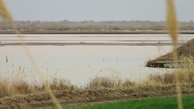wheat stalk and lake - embankment stock videos & royalty-free footage