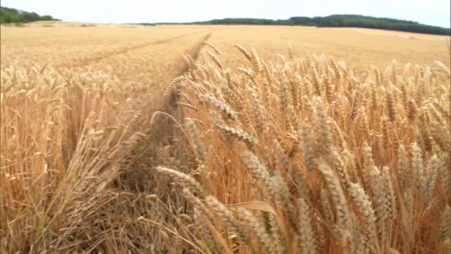 wheat - 穀草点の映像素材/bロール