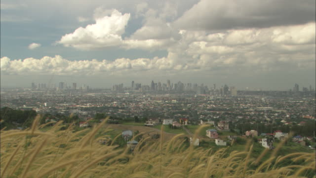wheat waves in a breeze near downtown manila. - manila philippines stock videos and b-roll footage