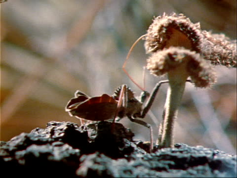 a wheel bug crawls across a tree branch. - invertebrate stock videos & royalty-free footage