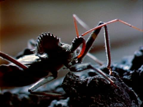 vídeos y material grabado en eventos de stock de a wheel bug crawls on a rocky surface in florida. - artrópodo