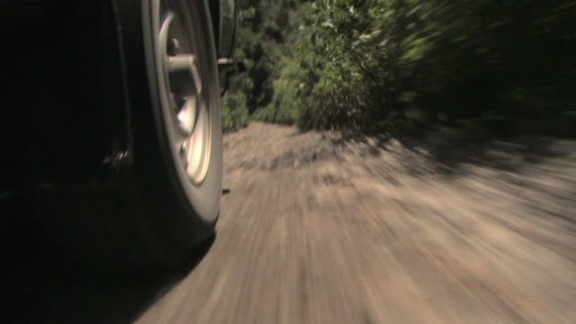 la ms wheel of suv driving through forest/ manu national park, peru - tropischer regenwald stock-videos und b-roll-filmmaterial