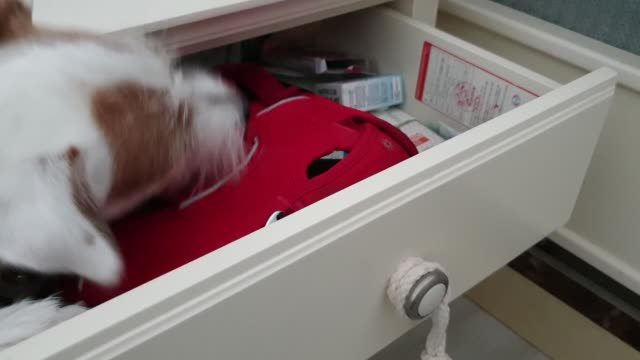 when her owner asks 'shall we go for a walk?', this clever pup opens the drawer, takes the harness and the leash to the him, and closes the drawer.... - drawer stock videos & royalty-free footage