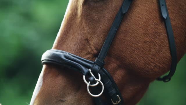 vídeos de stock, filmes e b-roll de quando você contar suas bênçãos, conte seu cavalo - fofo descrição geral