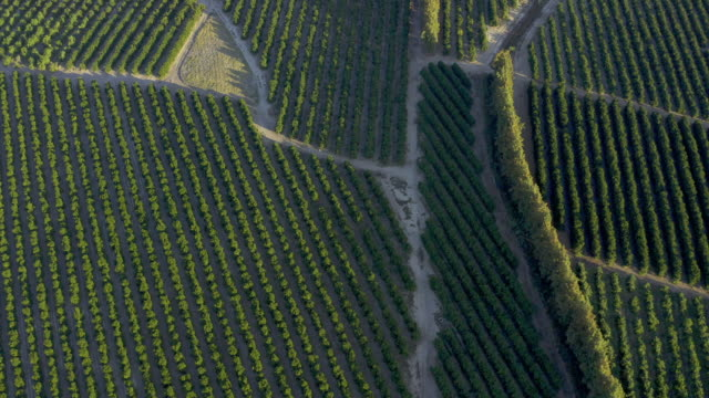 where some of the world's best oranges are grown - topography stock videos & royalty-free footage