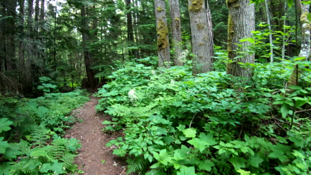 pov while moving along forest trail, past vegetation - walking point of view stock videos and b-roll footage