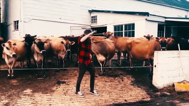 while on a visit to lancaster, pennsylvania, dancer chris dixon got the urge to dance. chris needed an audience and got the idea to see how cows... - lancaster pennsylvania stock videos & royalty-free footage