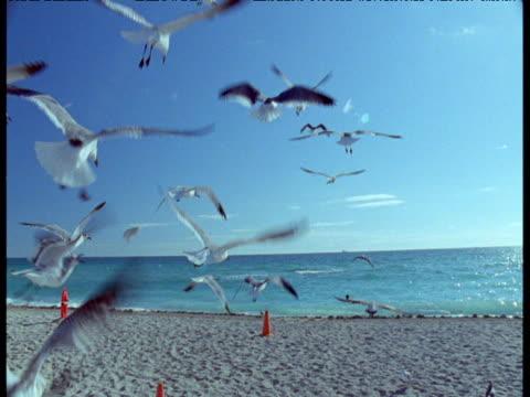 whip pan from flock of gulls over sea to lifeguard hut, miami beach - cabina del guardaspiaggia video stock e b–roll