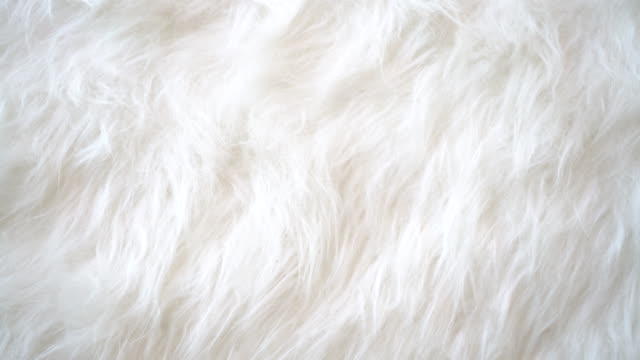 white animal fur background. - morbidezza video stock e b–roll