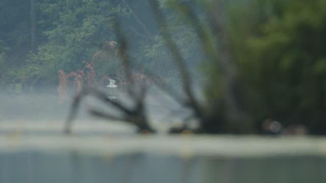 湖の近くを飛んで飛ぶ白い鳥 - ネイチャーズウィンドウ点の映像素材/bロール