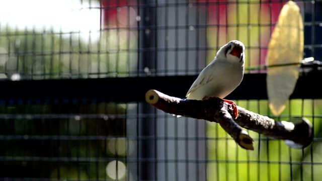 vídeos de stock, filmes e b-roll de ave branca em uma gaiola - encurralado