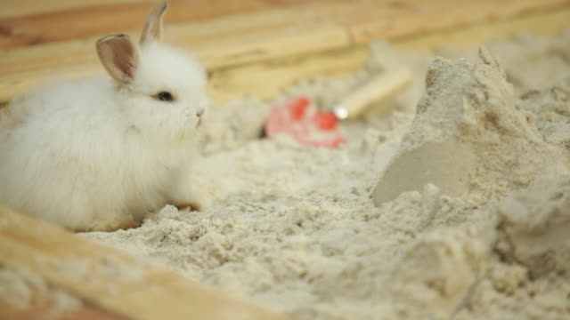 white bunny enjoying a moment in garden sand pit - work tool stock videos & royalty-free footage