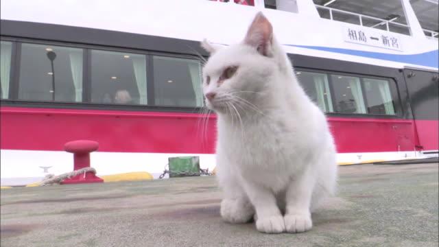 A white cat sitting on the quay in the harbor, Ainoshima, Fukuoka, Japan