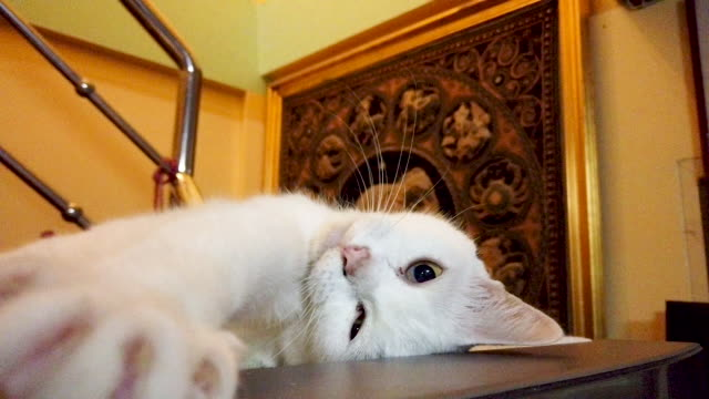 white cat - stretching stock videos & royalty-free footage