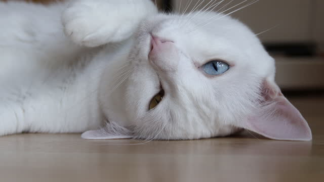 white cat - large stock videos & royalty-free footage