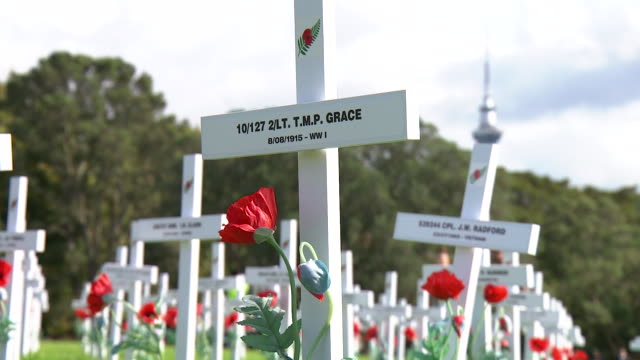 white crosses on lawn bearing names of soldiers killed in war with red poppy flowers planted next to them on day of anzac service at auckland war... - poppy stock videos & royalty-free footage
