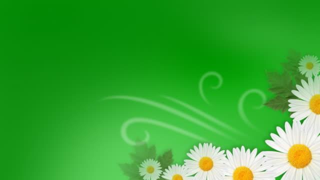 cgi, white daises growing against green background - 少数の物点の映像素材/bロール