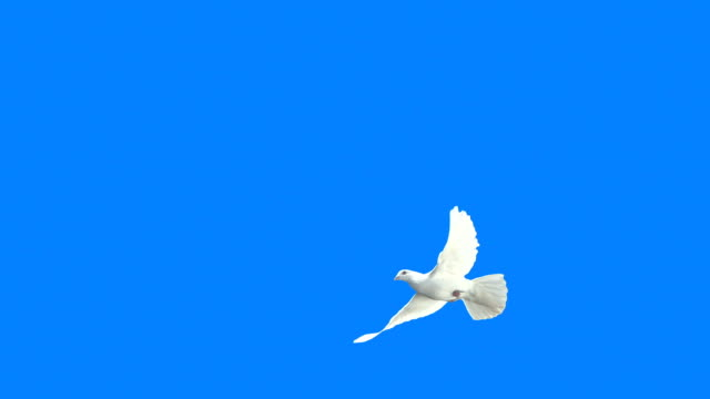 White Dove Crossing Frame (Super Slow Motion)