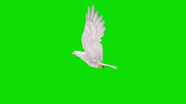 white eagle flying animation on green screen. the concept of animal, wildlife, games, back to school, 3d animation, short video, film, cartoon, organic, chroma key, character animation, design element, loopable - falcon bird stock videos & royalty-free footage